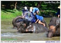 ศูนย์อนุรักษ์ช้างไทย