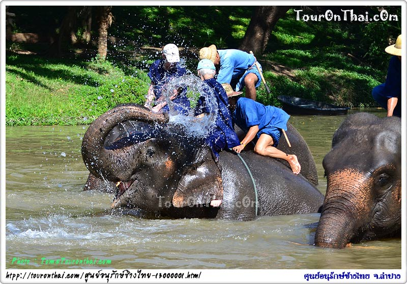 ช้างอาบน้ำ