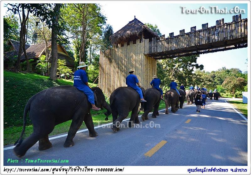 เดินทางสู่ลานแสดงช้าง