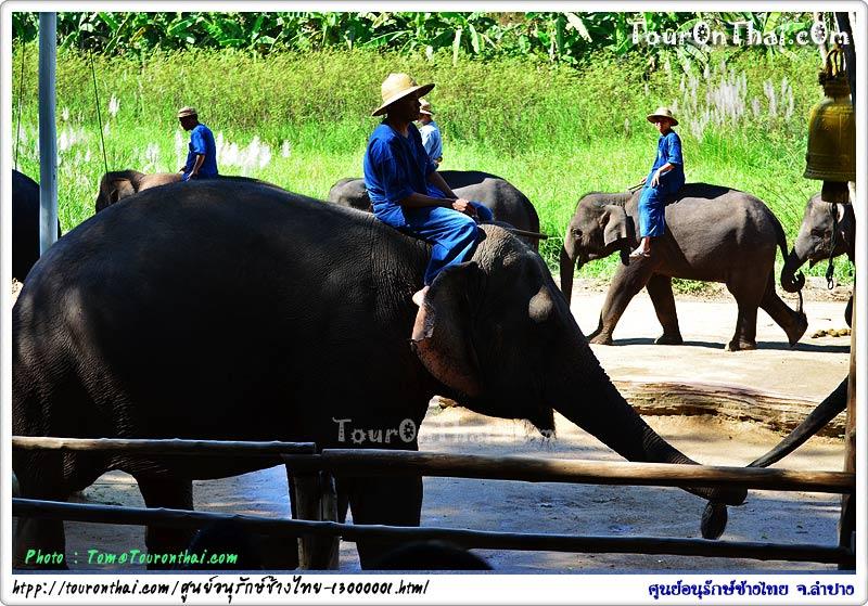แนะนำตัวช้าง