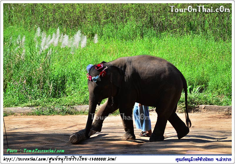 แสดงความสามารถช้าง