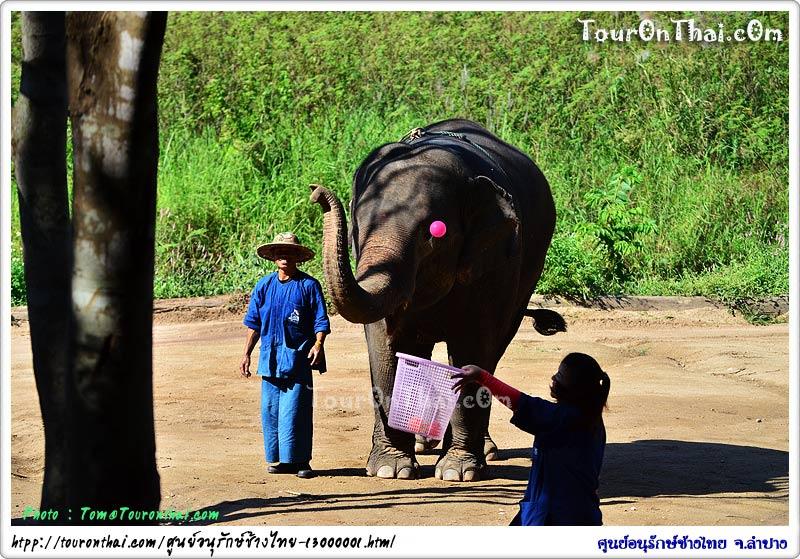 ช้างชู้ตบอล