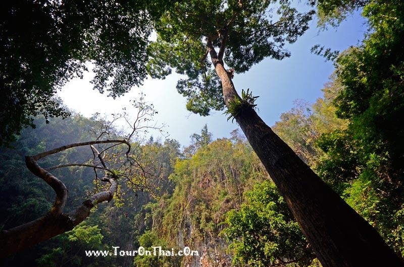 ต้นตะเคียนร้อยปี