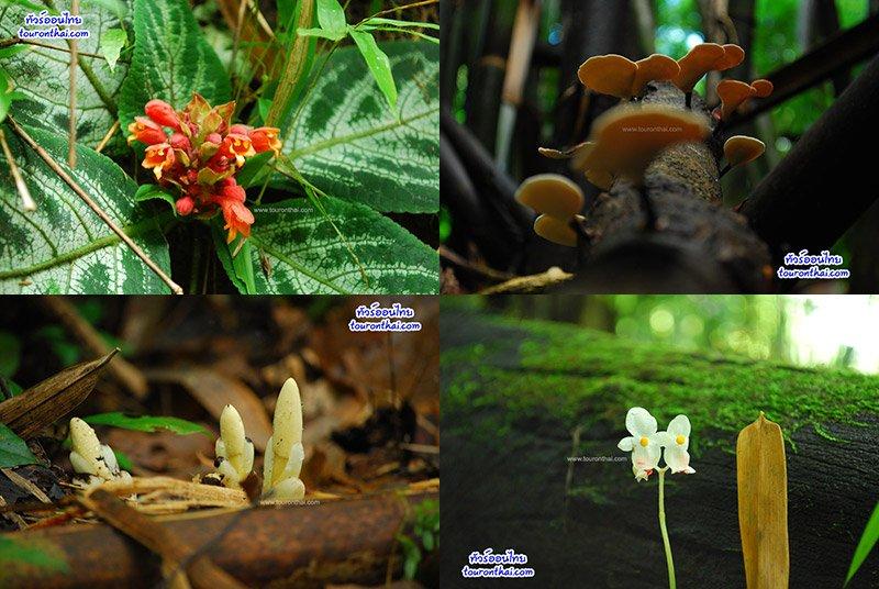 ดอกไม้ป่าชนิดต่างๆ ที่ภูสอยดาว