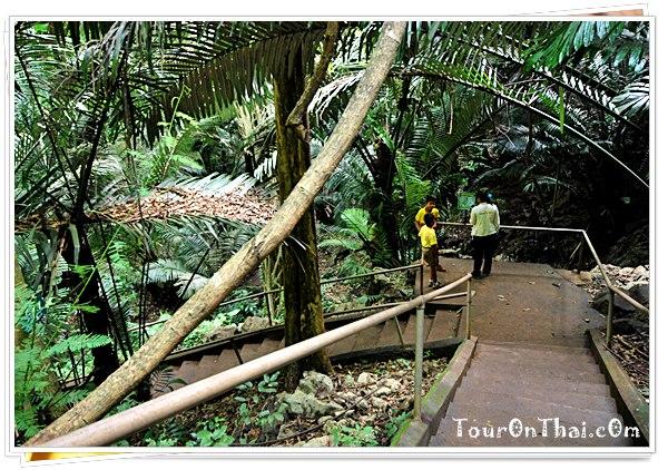 ทางเดินลงหุบป่าตาด