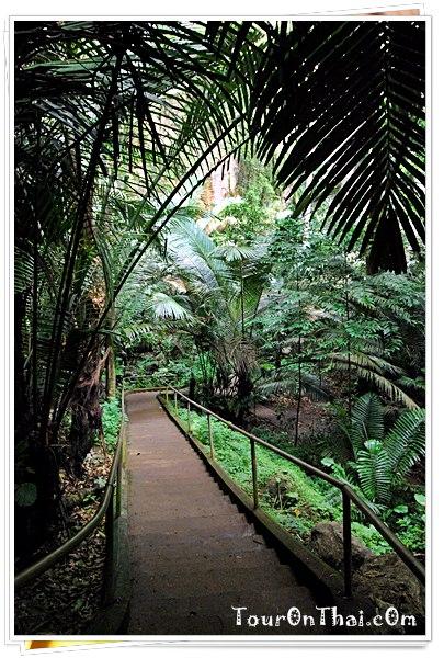 ทางเดินในหุบป่าตาด