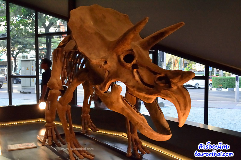 Big Bone Gallery โครงกระดูกไดโนเสาร์