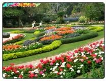 สวนแม่ฟ้าหลวง ดอยตุง