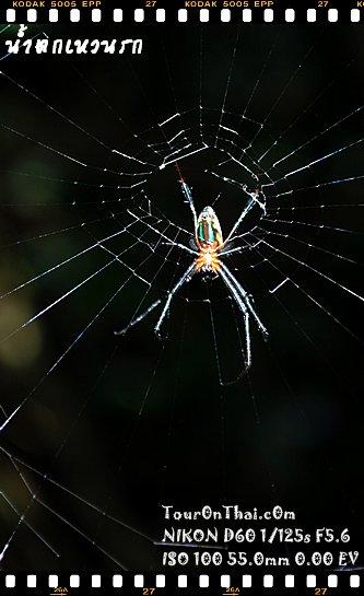 แมงมุมประหลาดบนเขาใหญ่