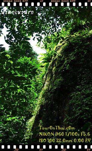สภาพความบูรณ์ของป่าเขาใหญ่