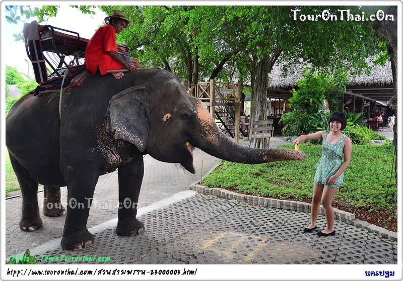 เลี้ยงช้าง สวนสามพราน