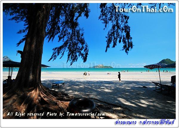 ต้นสนเปลผ้าใบและหาดทราย