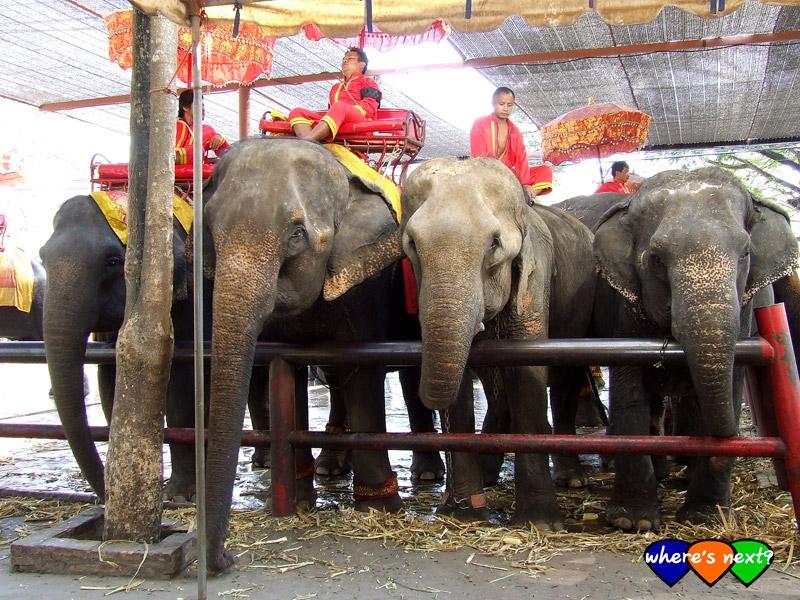 ช้างรอคิว