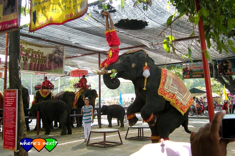 โชว์ 2 คนต่อตัวช้าง