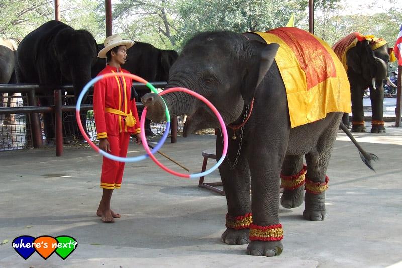 การแสดงช้างเล่นฮูลาฮูป