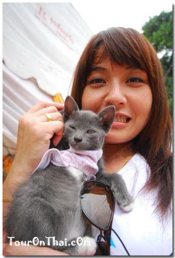 น้องเอินกับแมววัดอโยธยา