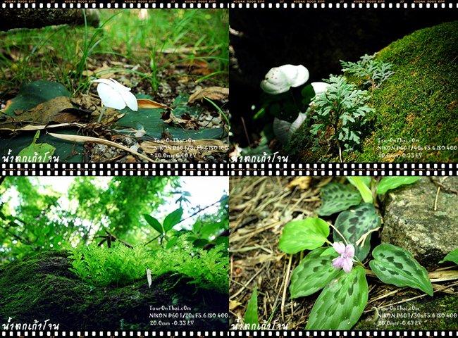 ดอกไม้ป่าและพืชที่พบในน้ำตกเก้าโจน