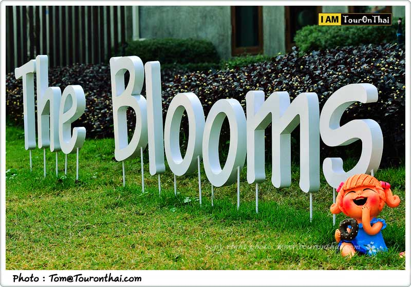 ยินดีต้อนรับสู่ The Blooms