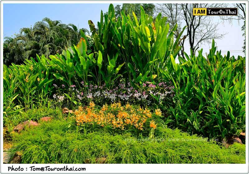 อุทยานกล้วยไม้เดอะบลูมส์ออร์คิดพาร์ค