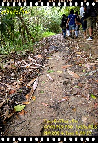 เส้นทางเดินป่าน้ำตกผาแดง