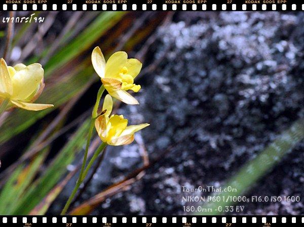 ดอกไม้ที่ถ่ายยาก
