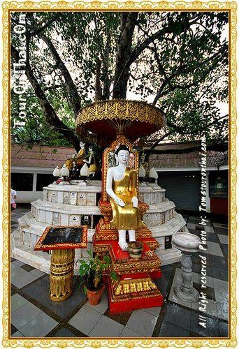 ต้นพระศรีมหาโพธิ์อินเดีย