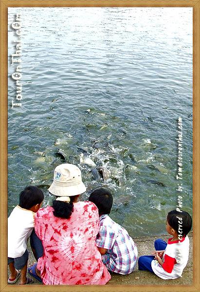 มอง ป.ปลา น่ากิน