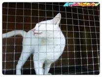 ศูนย์อนุรักษ์แมวไทย