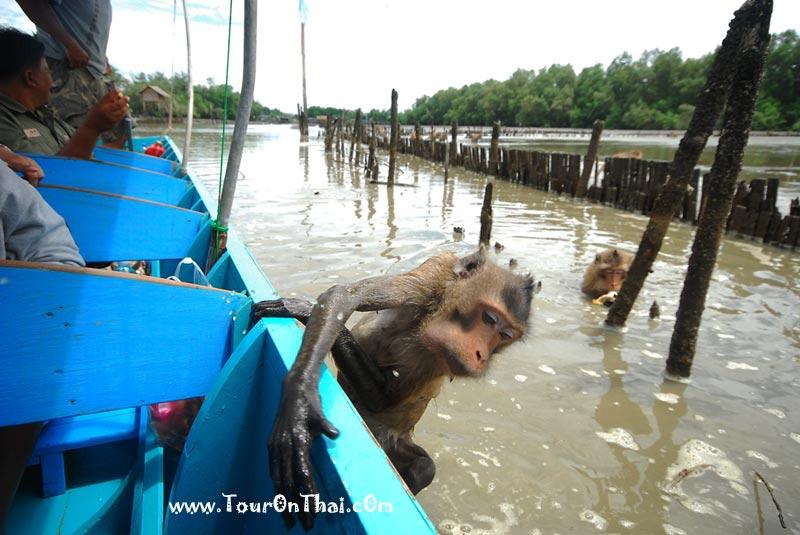 ลิงสลัดเกาะเรือ