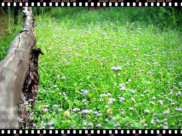 ทุ่งหญ้าธรรมดาที่ดูสวย