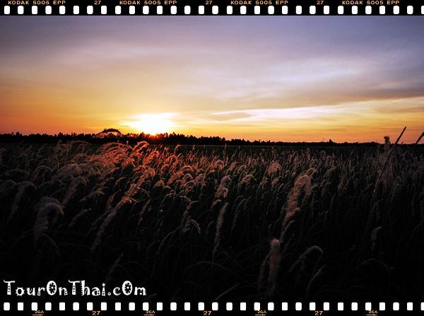 พระอาทิตย์ตกข้างทาง