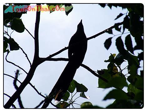 นกบนต้นไม้ที่ลานจอดรถ