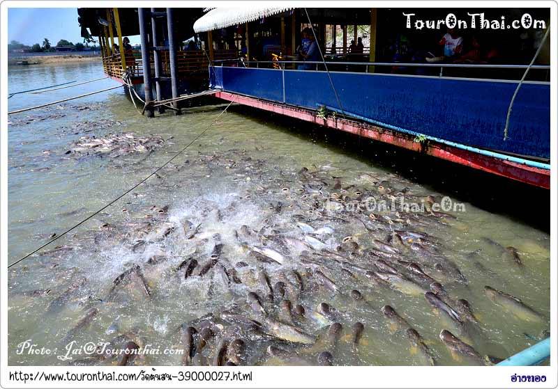 เลี้ยงอาหารปลาวังมัจฉาวัดต้นสน