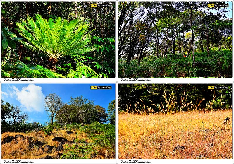 ป่าเฟิร์นและทุ่งหญ้า