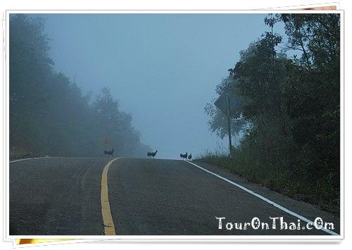 ไก่ป่าข้ามถนน