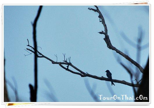 ชมนกที่อุทยานแห่งชาติตากสินมหาราช