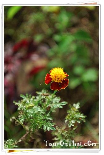 ชมดอกไม้ชมวิว