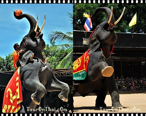 การแสดงช้างแสนรู้