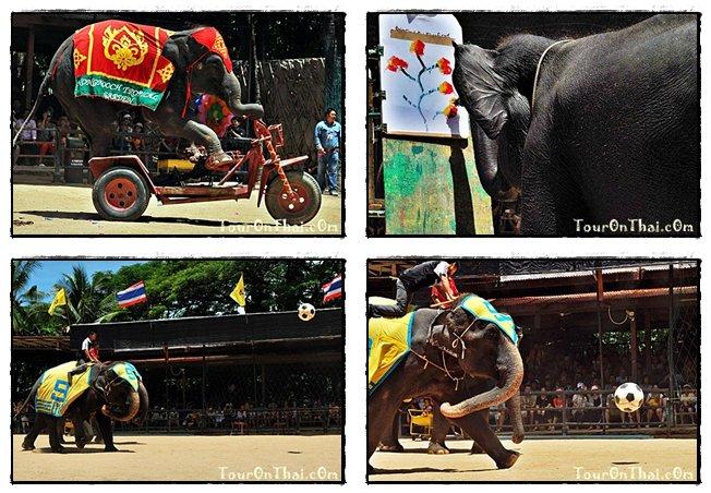 ช้างแสนรู้โชว์ความสามารถ