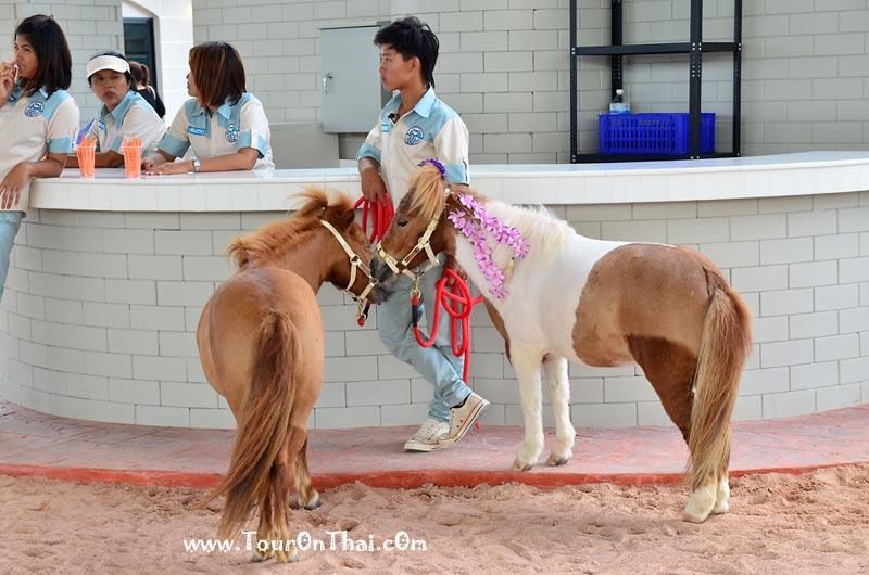 ตะลุยฟาร์มโพนี่ Pipo Pony Club
