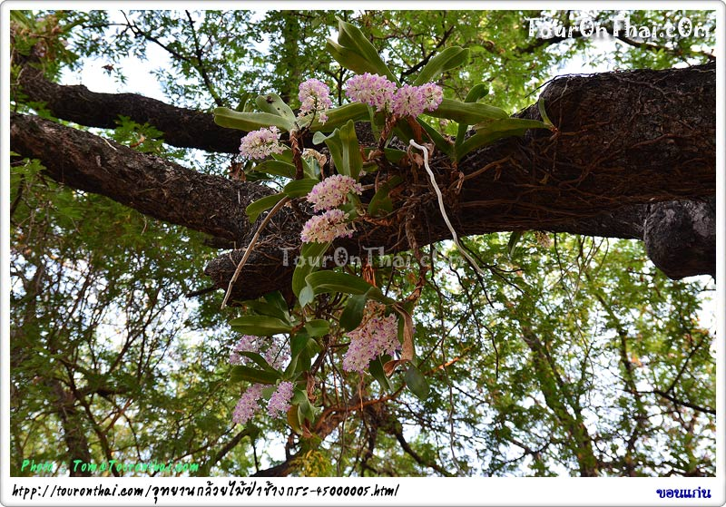 อุทยานกล้วยไม้ป่าช้างกระ วัดป่ามัญจาคีรี