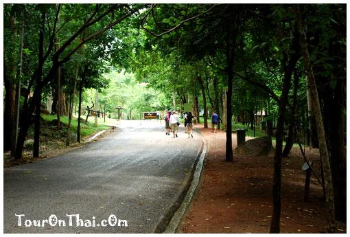 ทางเดินเขียวขจีสู่น้ำตกตาดโตน