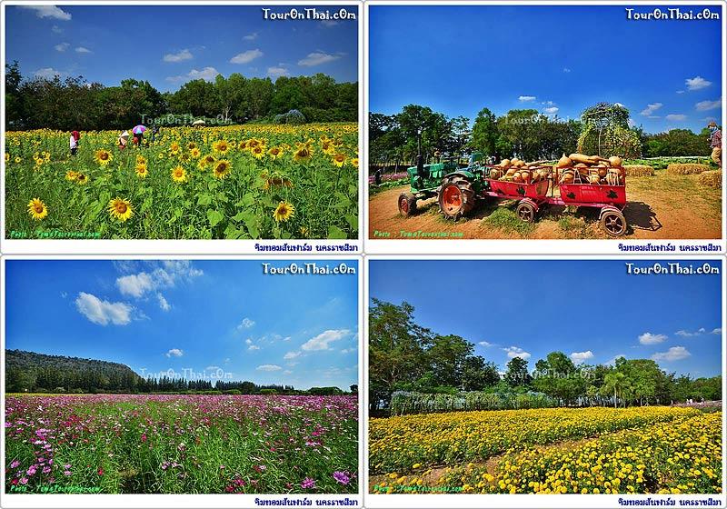 ทุ่งดอกไม้จิมทอมป์สันฟาร์ม