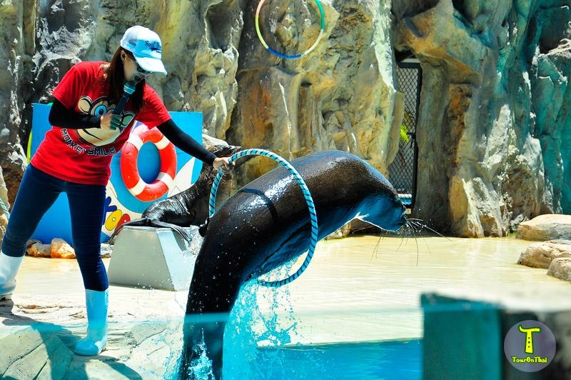 สนาม ATV เด็ก สวนสัตว์นครราชสีมา