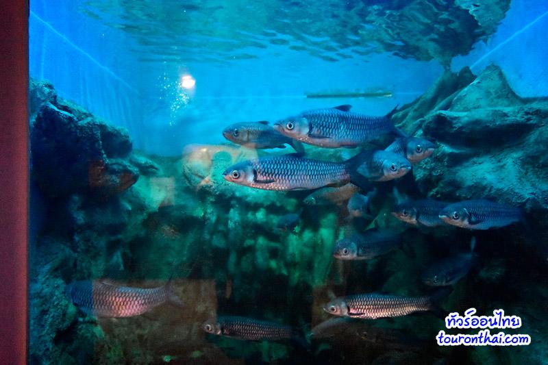 อาคารแสดงพันธุ์สัตว์น้ำบึงบอระเพ็ดเฉลิมพระเกียรติ ๘๐ พรรษาฯ