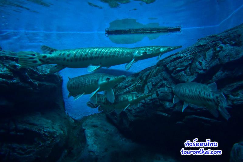 ปลาฟอริด้าการ์