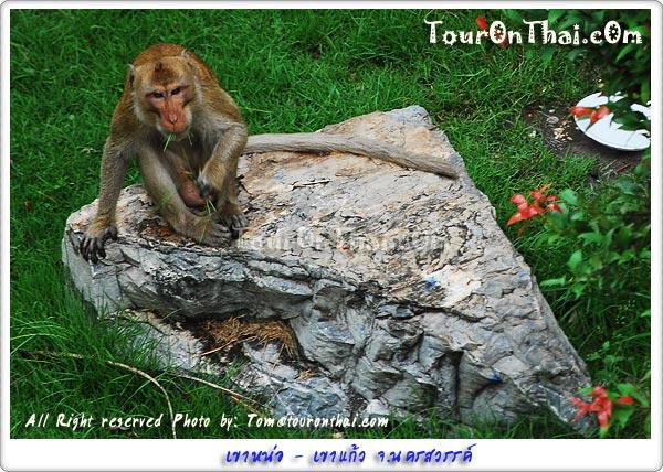 ลิงดูคนหรือคนดูลิง