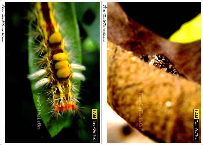 โลกของแมลง