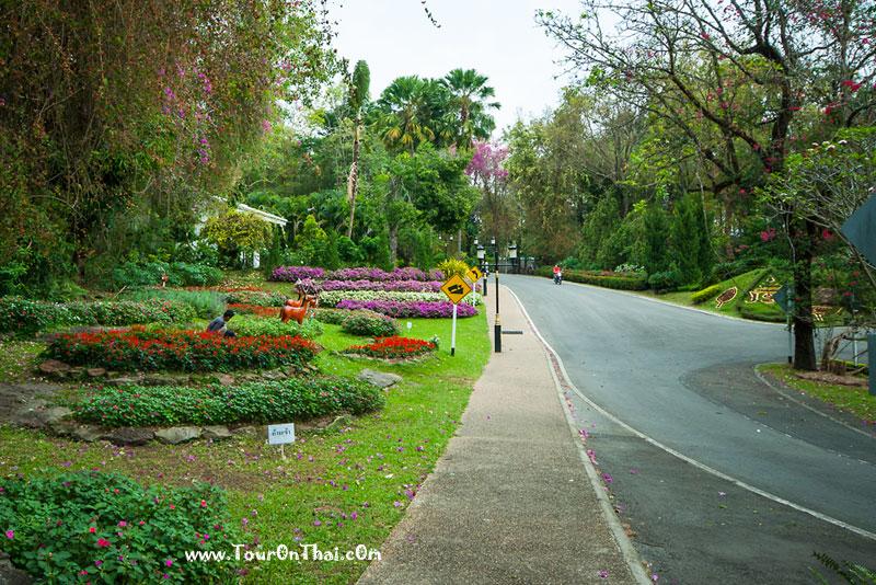 สวนหย่อมไม้ดอก
