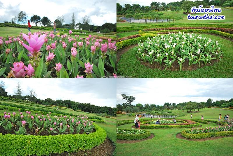 สวนดอกกระเจียวภูฝอยลม
